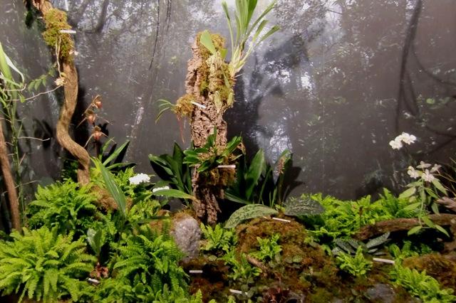 ボルネオの原生地を模した風景