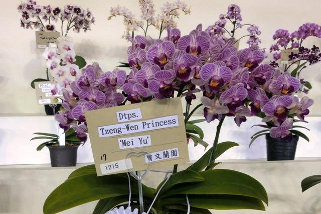 """Dtps.Tzeng-Wen Princess """"Mei Yu"""""""