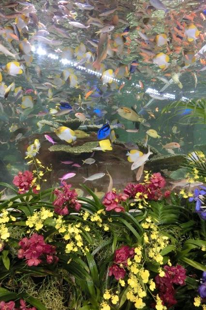 元気よく泳ぎまわる色とりどりの魚達