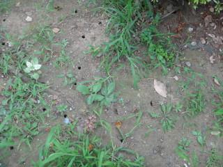 蝉の幼虫が出た穴
