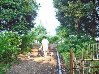 2008 08 03お散歩3-1