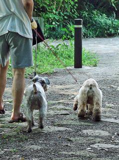 2008 08 03お散歩21