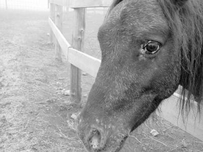 2008 08 17牧場
