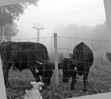 2008 08 17牧場3