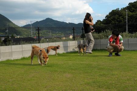 犬飼の理想的芝生お庭。