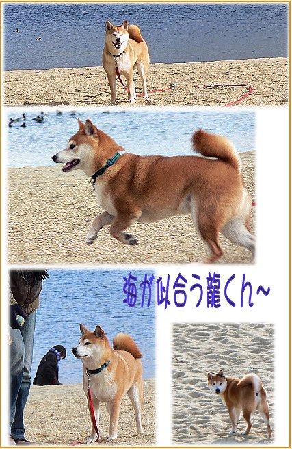 asiyahama11.jpg
