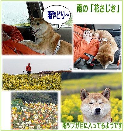 awaji11.jpg