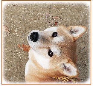 inariyama3.jpg