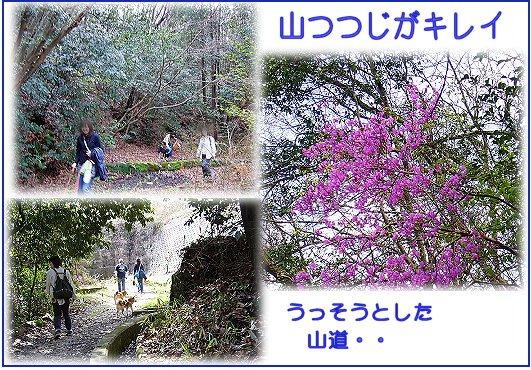 pikuniku2.jpg