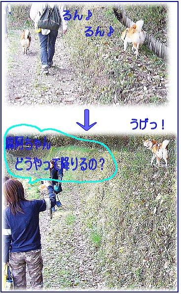 pikuniku4.jpg