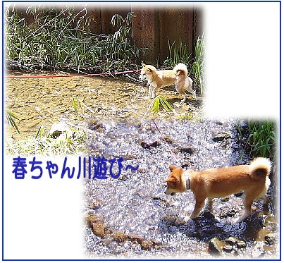 pikuniku5.jpg