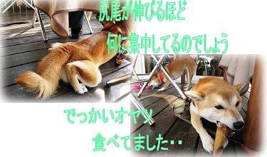 utiawase2.jpg