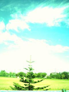 夏休みの校庭