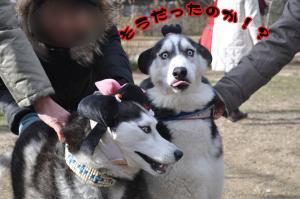 12.25愛ハス1