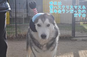 12.25愛ハス