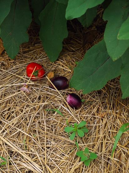 夏野菜トマト茄子