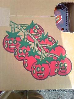 tomatomatomao.jpeg
