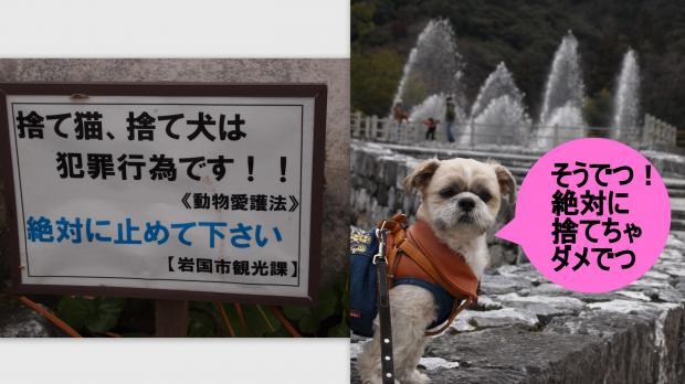 2012-01-161_convert_20120224223505.jpg