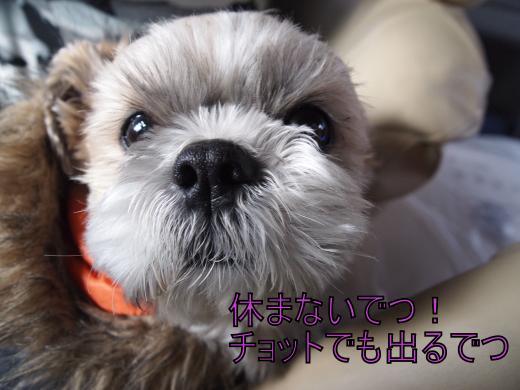 ・搾シ捻2100798_convert_20120218225341