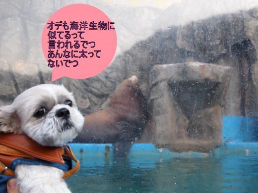 ・搾シ捻1139881-1_convert_20120221155906