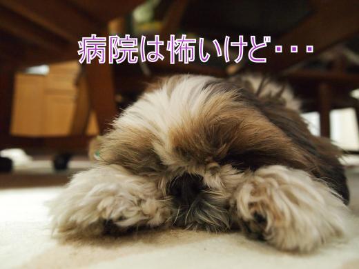 ・搾シ撤2270932_convert_20120228152511