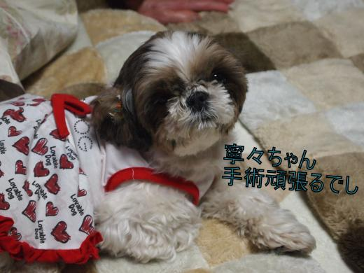 ・搾シ儕2270933_convert_20120228152526