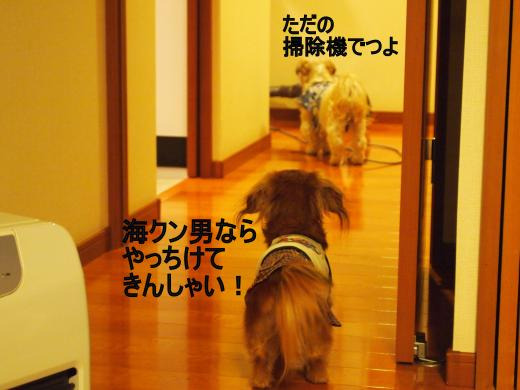 ・搾シ撤2160824_convert_20120229002540