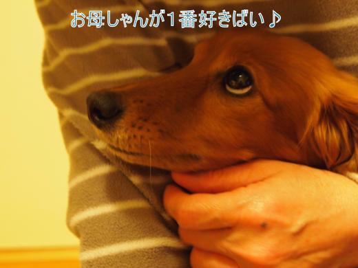 ・搾シ撤2160837_convert_20120229002703