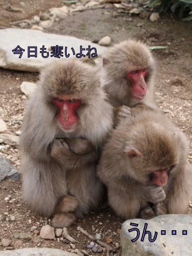 ・搾シ撤1280371_convert_20120302233917