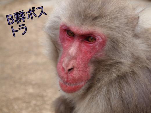 ・搾シ捻1280385_convert_20120302234759
