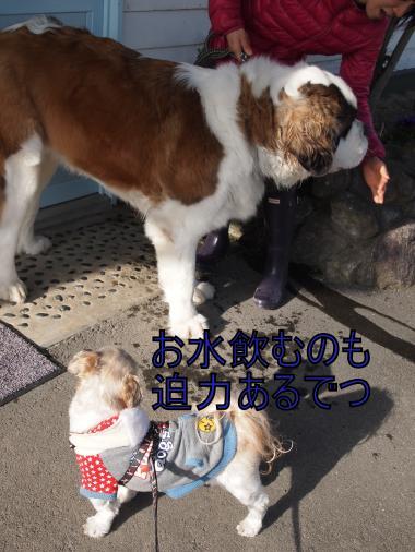 ・搾シ単3211101_convert_20120323234453