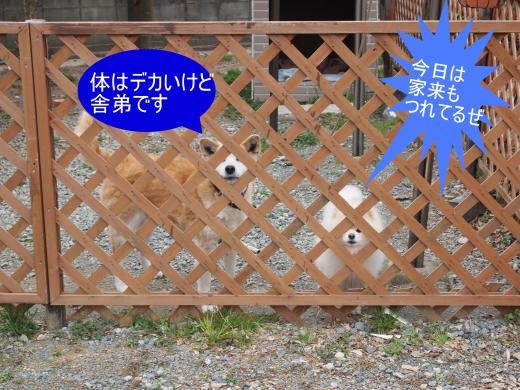 ・搾シ撤2280935-1_convert_20120324013126