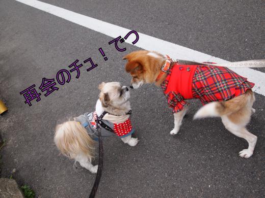 ・搾シ撤3221127_convert_20120324011258