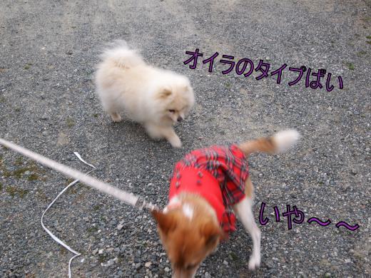 ・搾シ撤3221140_convert_20120325223431