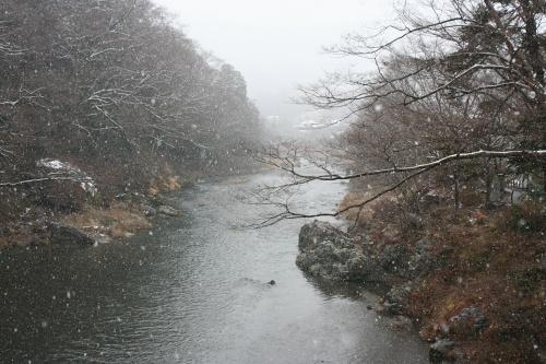 yamasemi2_006.jpg
