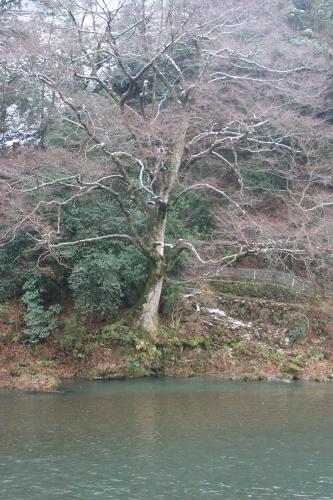 yamasemi2_062.jpg