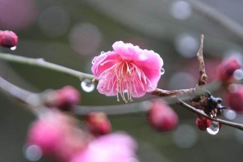 yamasemi2_148.jpg