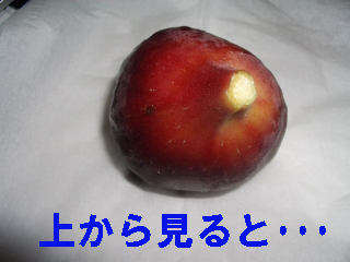 IMGP1617-e.jpg