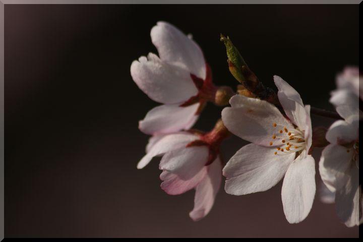 ~ 可児桜7