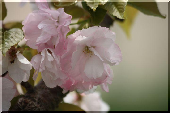 ~ 高桑桜4 楊貴妃