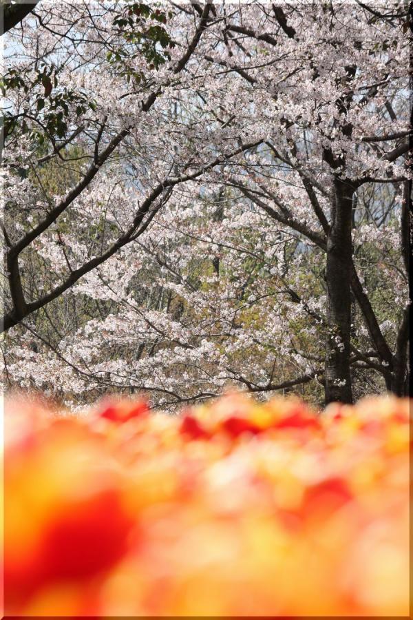 ~ 木曽三川公園3