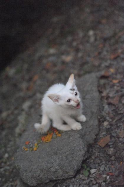 ニャア!/仔猫