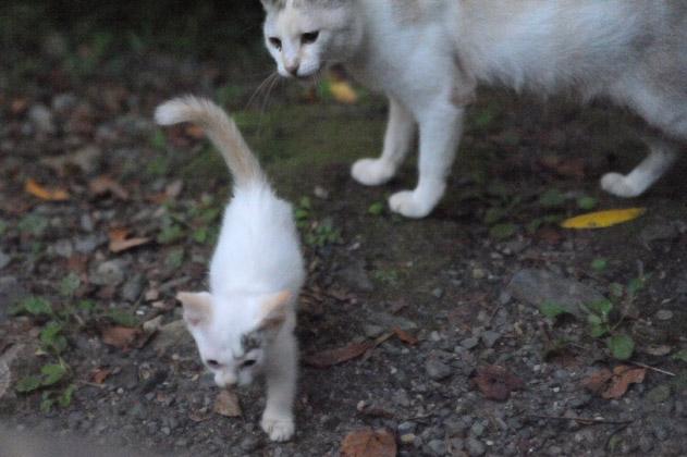 お母さんと仔猫