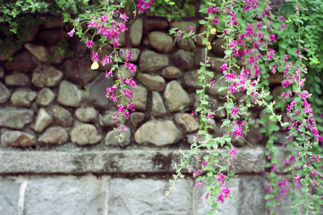 10月の紋黄蝶