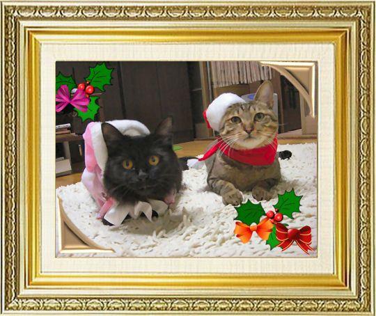 ねこ 猫 クリスマス祭り26赤いさんにゃとピンクのさんにゃ