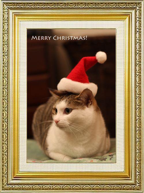 ねこ 猫 クリスマス祭り27だい子の初めての帽子
