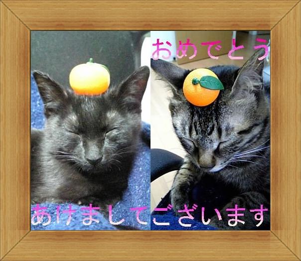 ねこ 猫 新年のご挨拶祭り05