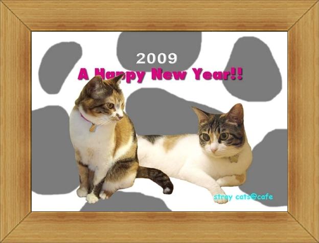 ねこ 猫 新年のご挨拶祭り12