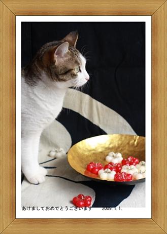 ねこ 猫 新年のご挨拶祭り14
