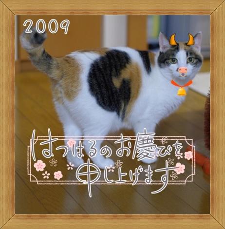 ねこ 猫 新年のご挨拶祭り15